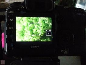 20090101-CAM00050-Edit