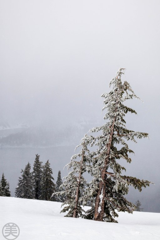 Windy snowy day. Crater Lake is behind the tree but you can see only a hint of island shape.